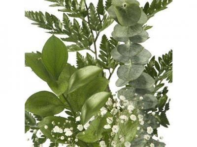 9 Decorative Plants for Bouquets