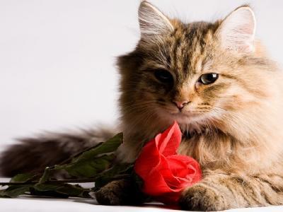 Valentine's Day - pe scurt