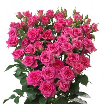 Rose Spray Tessa 60 cm