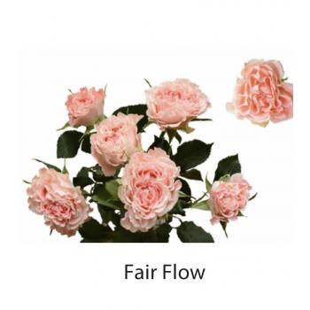 Fairflow