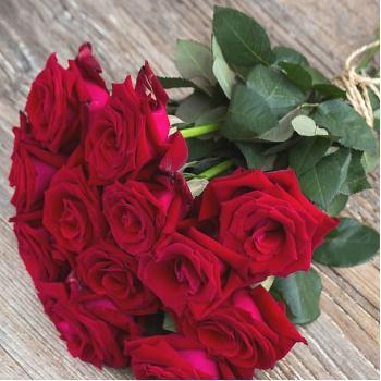 Garden Rose Lady Killer 45 cm